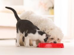 Dossier - Nourriture pour animaux