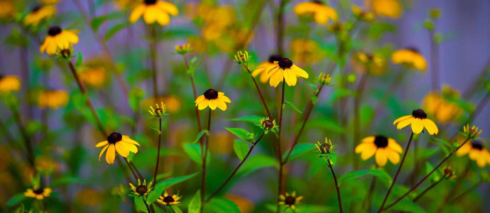 planter-fleurs