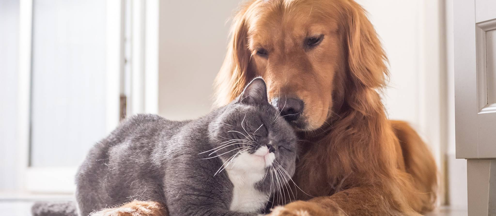 chat-chien