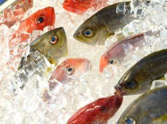 Les stocks de poissons s'épuisent