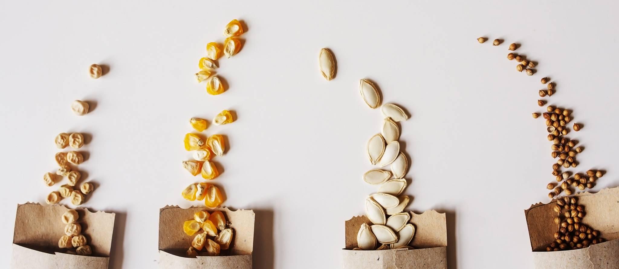 achat-semences
