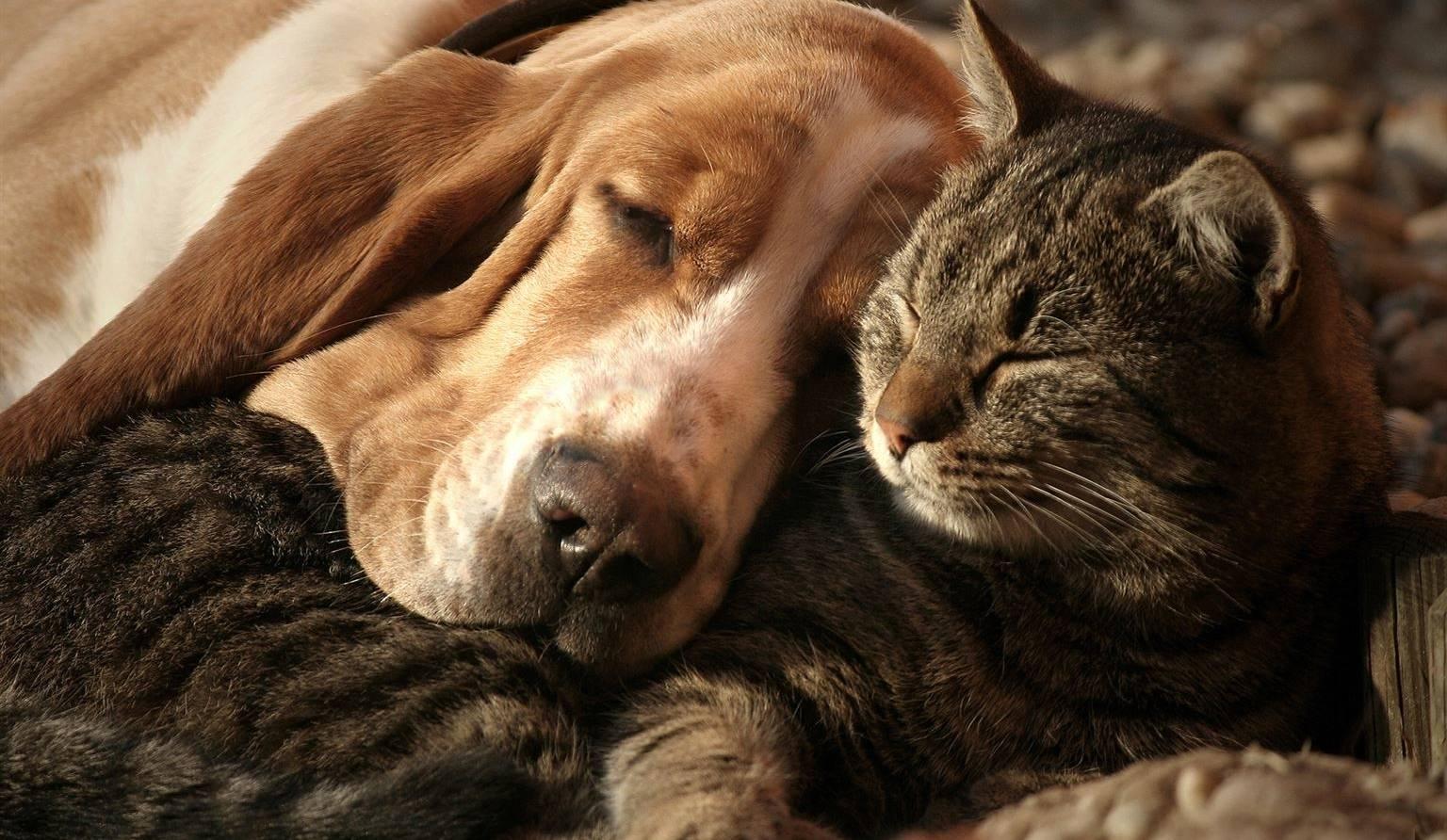 Faire euthanasier un animal de compagnie