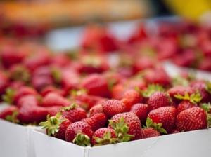 Doit on craindre la fin des fraises quebecoises
