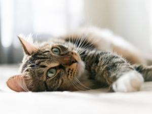 9 questions à se poser avant d'adopter un chat ou un chien