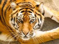 038-Zoo-de-Granby-Activite-Face_OADA_768x573.jpg