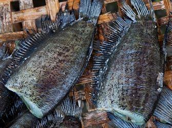 Liste verte des poissons et fruits de mer acheter for Acheter des poissons