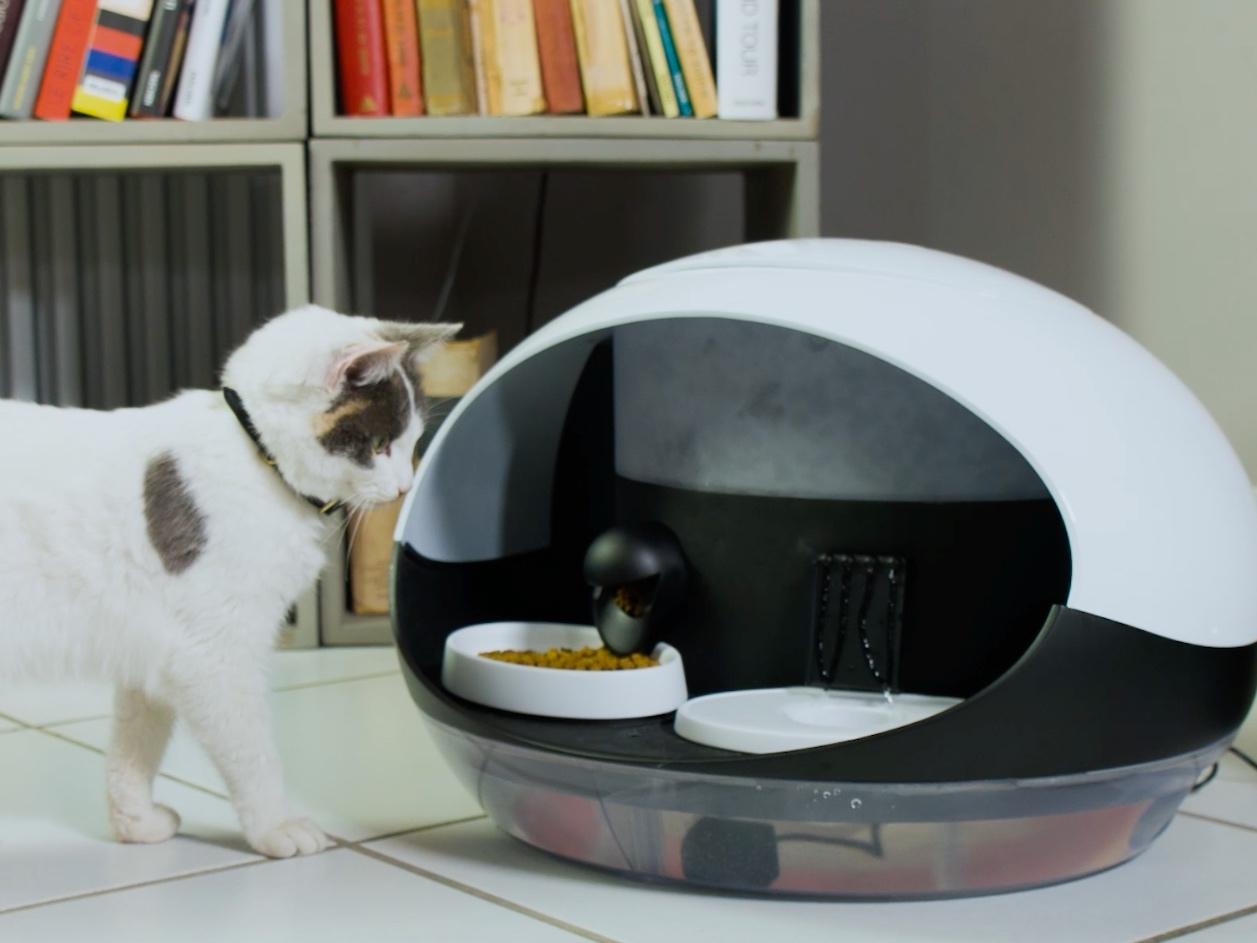 un distributeur automatique de nourriture pour chats prot gez. Black Bedroom Furniture Sets. Home Design Ideas