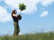 Planter un arbre a la memoire du defunt