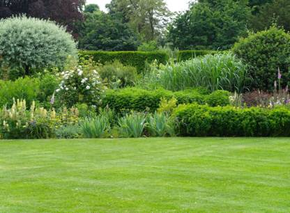 arbustes-pelouse