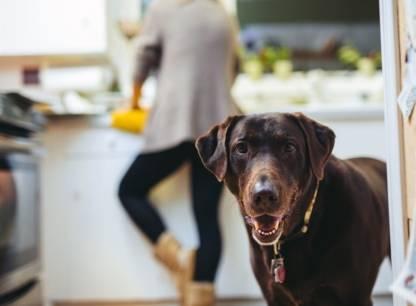 Bail et animaux domestiques: fini les interdictions?