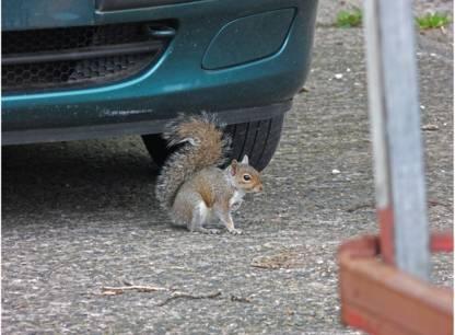 ecureuils-auto