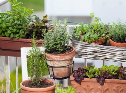 jardin-balcon