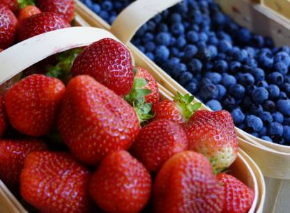 petits-fruits