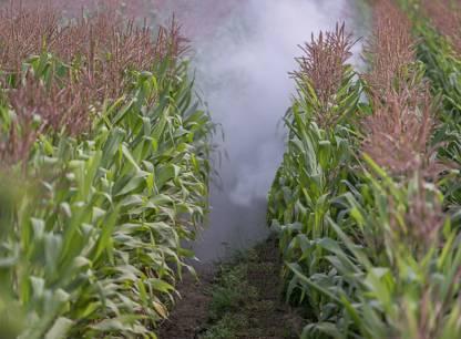 Sans OGM autorise en France