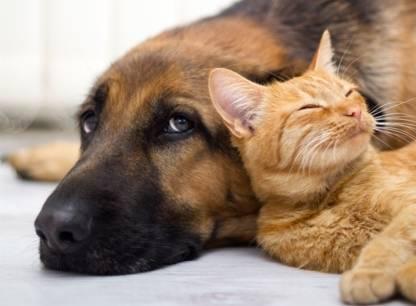 Chats et chiens: solutions à 5 comportements indésirables