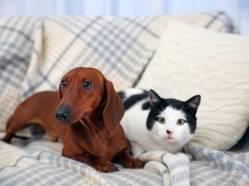 Adopter un chien lorsqu'on a déjà un chat... et vice versa