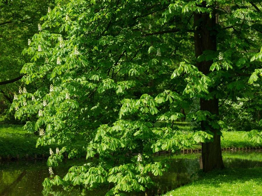 Entretien-arbres