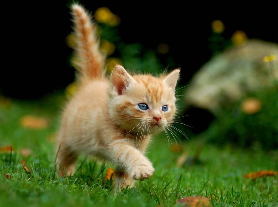Vaccins et traitements pour chatons