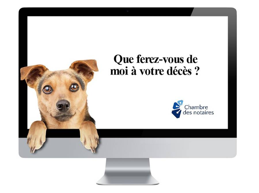 animal_deces_logo_photo_protegez_vous