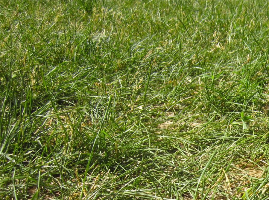 Pas touche mon gazon prot gez - Temps de pousse pelouse ...
