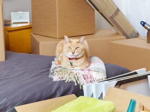 Conseils pour un déménagement réussi avec votre chat ou votre chien