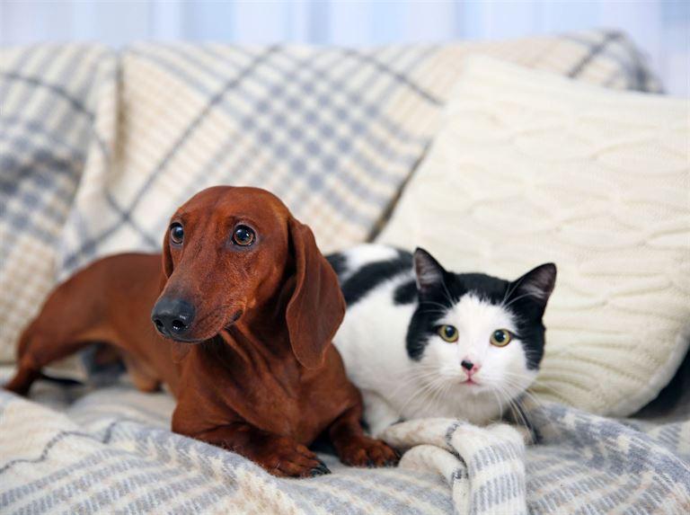 rencontre entre chien et chat adulte http d fr ain 23 1 rencontres adultes 85. Black Bedroom Furniture Sets. Home Design Ideas